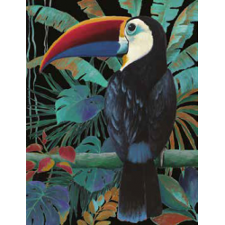 Toucan noir