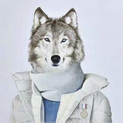 Loup en blouson